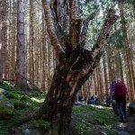 12-gjennom-frodig-og-gammal-skog