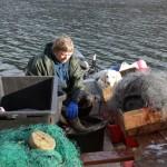 todalsfiske_9510