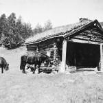 15 Hestar ved Oppistuskjelet på Hjellnessetra