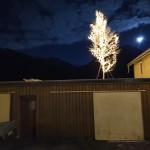 Juletre på Strandheim