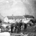 6jm hallvard ø på naustådalssetra 1926