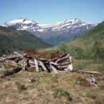 41 Høyløe tilhøyrer Viastua (1983)