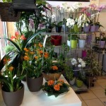 Orkideen blomster og gaver