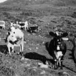 6 Ildri Åsbø 1948