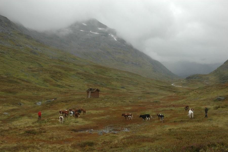 Rømlingar  i  Paradiset