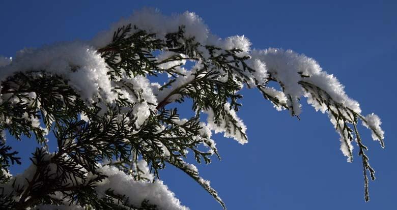 Laurdag: Juletorg i arboretet