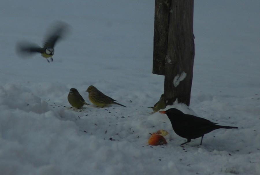 Småfuglar