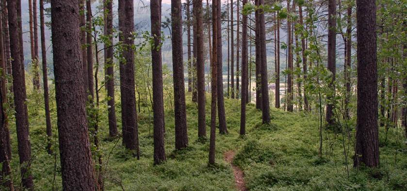 Det  vart  stort  skoglag…