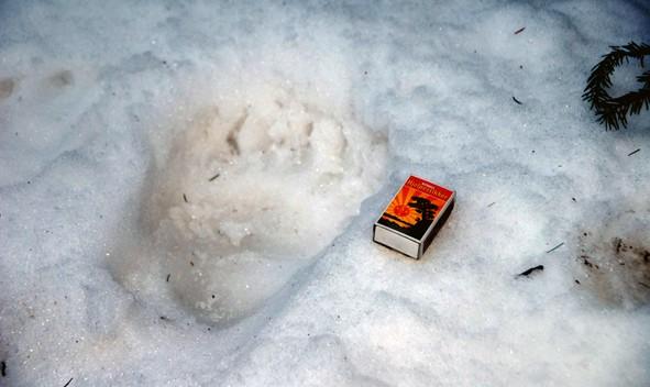 Bjørnespor på Hjellnes