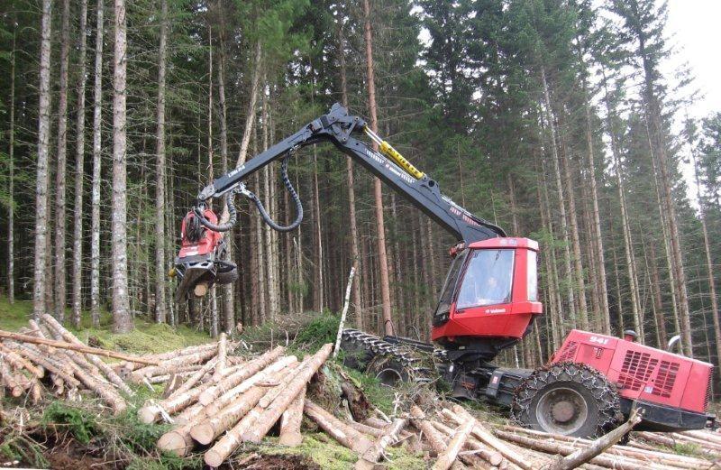 Effektiv  tømmerhogst  i  Øyalia