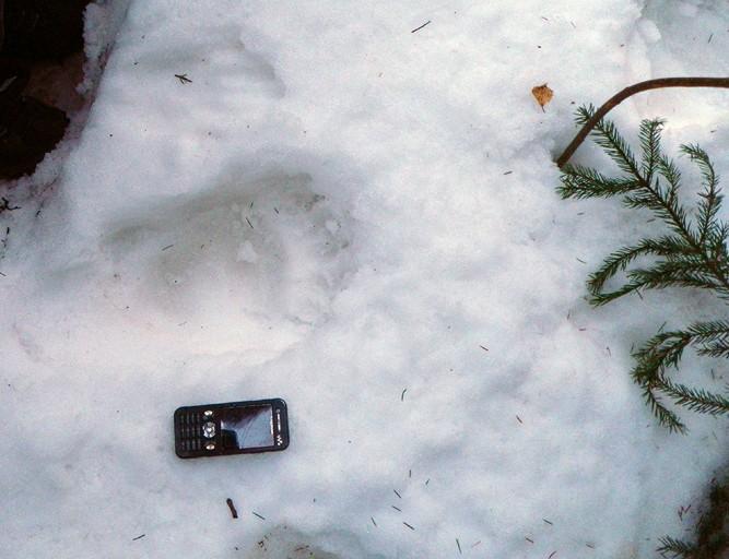 Bjørnespor  på  Gjeldnes  onsdag  kveld.
