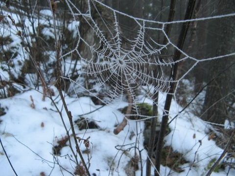 Naturens  nett