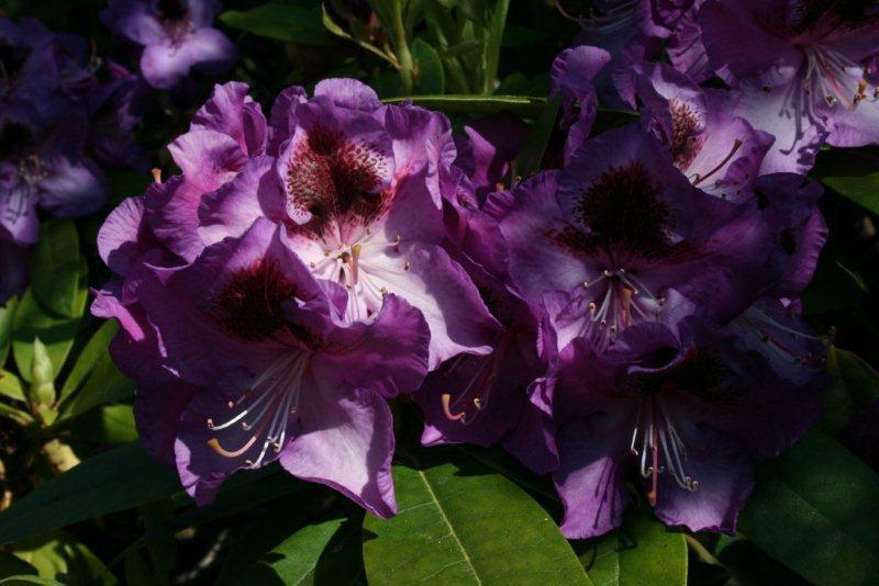 1000 opne hagar – i arboretet