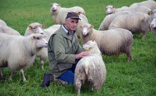 Sjå  etter  sauer  og  lam