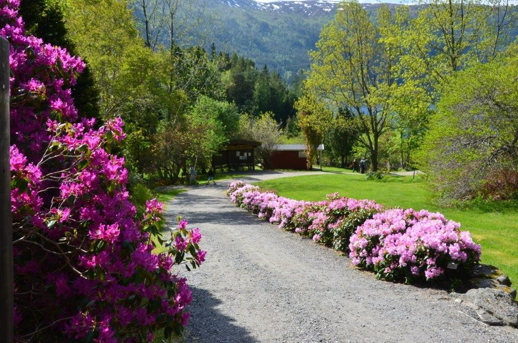 Full  flor  i  Svinviks  arboret…