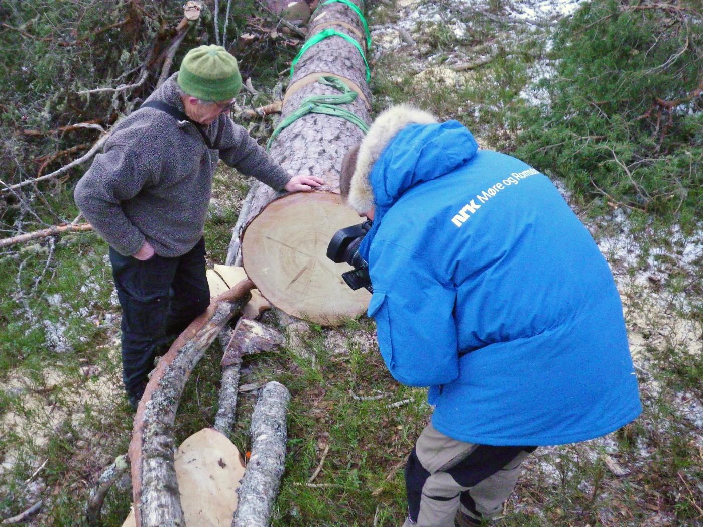 Jon Bojer Godal rekna over 200 årringar på stortåilla i Øyalia tidlegare i vinter.  Foto: Jon Bruset