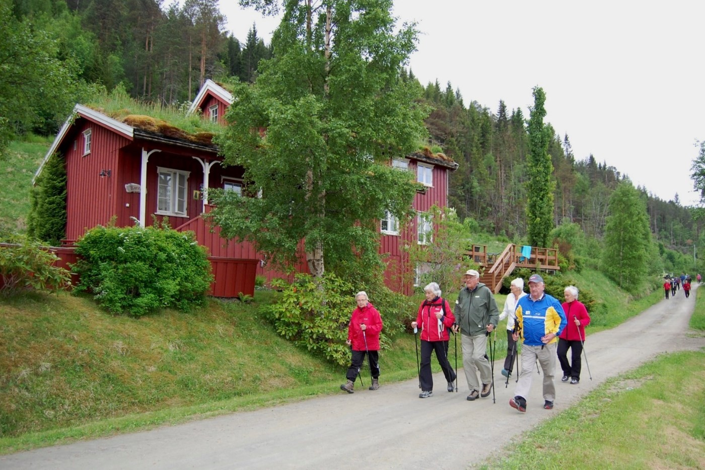 Sigrun Ørsal, Lisbet Ranes, Per Bruset, Gunnvor Sæter, Harry Skrøvset og Mali Sæther på tur innover langs Hamnesfjorden.  Foto: Vidar Sogge