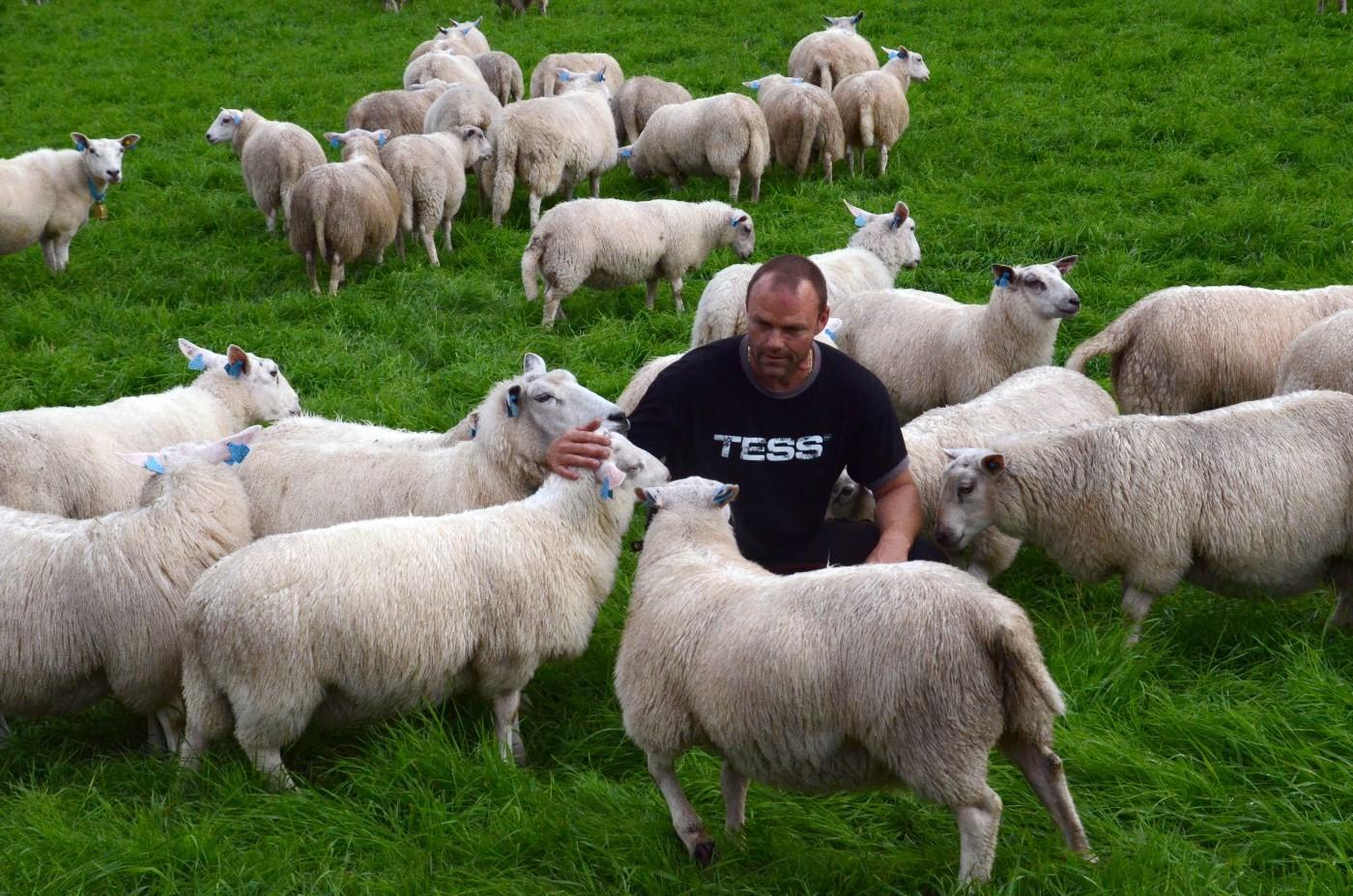 Bjørn har god kontakt med sauene, -no er han spent på kor mange han finn att i år.  Foto: Jon Olav Ørsal