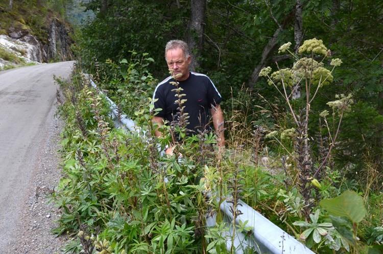 Jon Bruset kan by på både gjeitjul og lupiner i vegkanten.  Foto: Jon Olav Ørsal