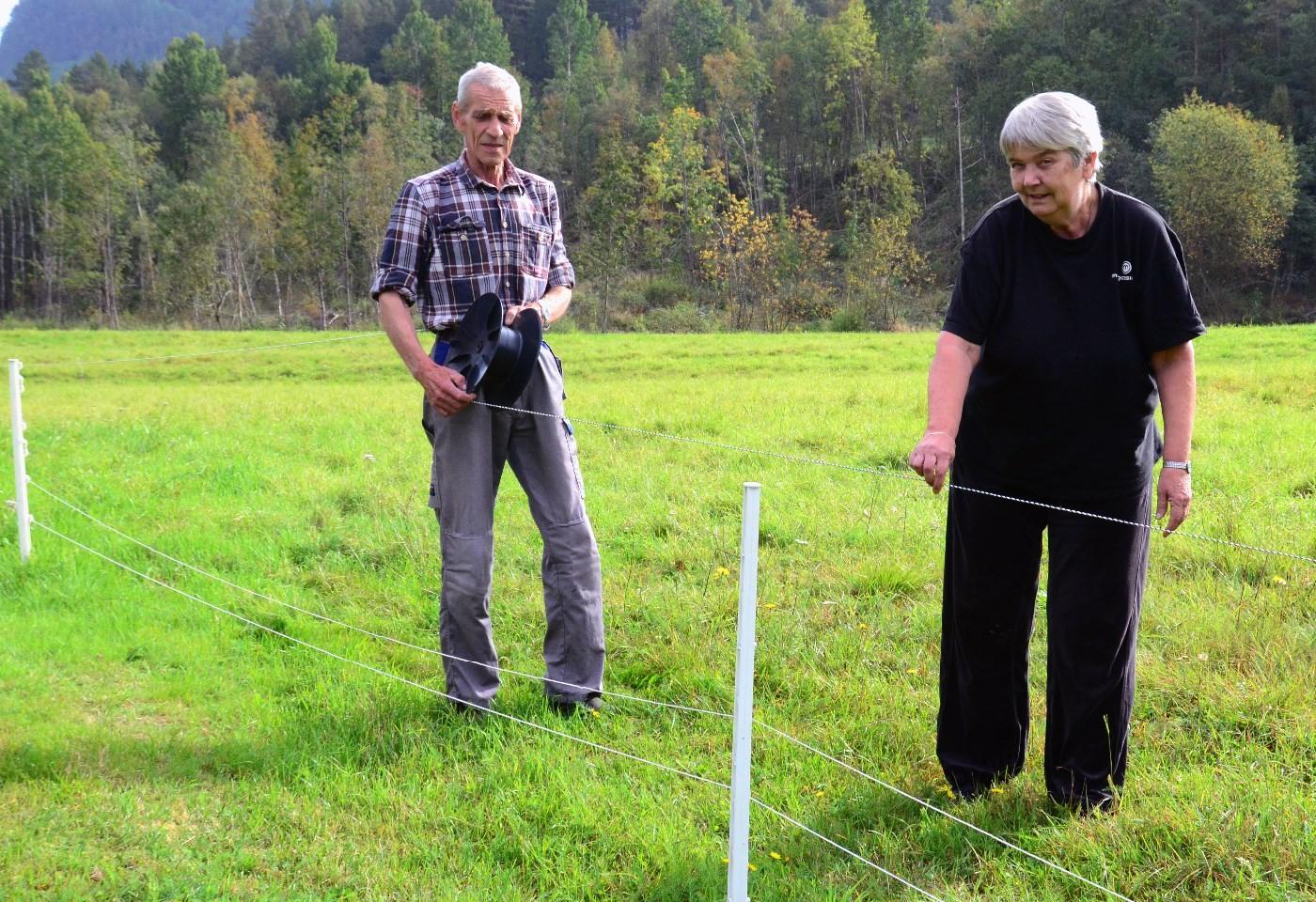 Kåre og Åse tek ned sauegjerdet etter at dei siste dyra er sendt.  Foto: Jon Olav Ørsal