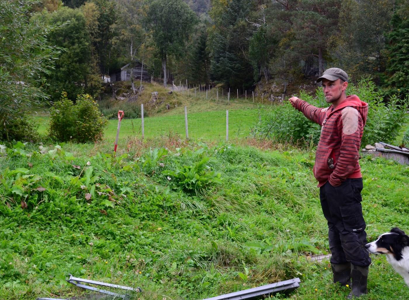 Ved grinda oppe i skogkanten stod moskusen ei lita stund, før den stakk til skogs igjen, fortalte Per Åke.  Foto: Jon Olav Ørsal