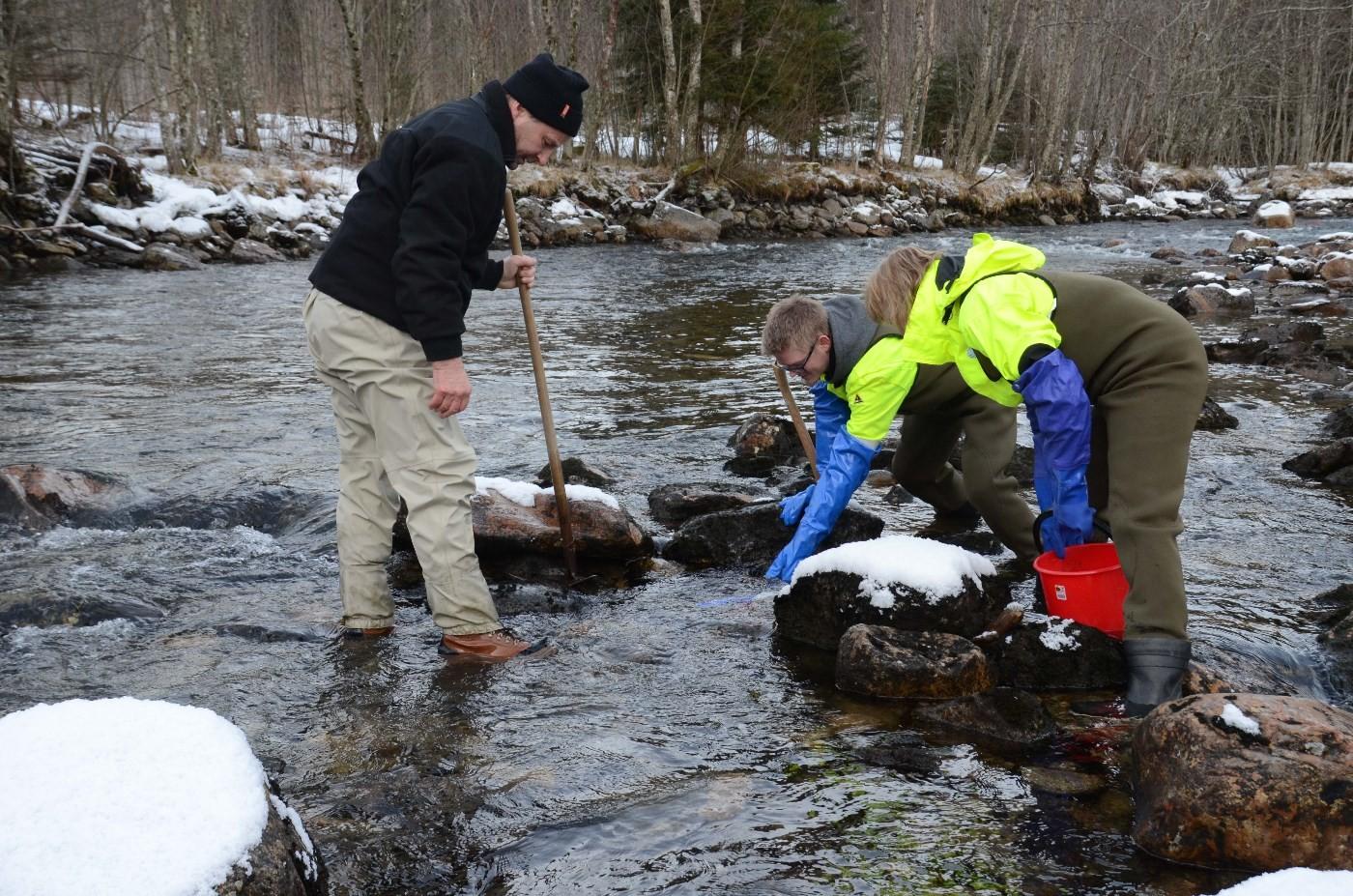 Viktig å finne gode plassar for utplassering av rognkassane.  Foto: Driva/Jon Olav Ørsal