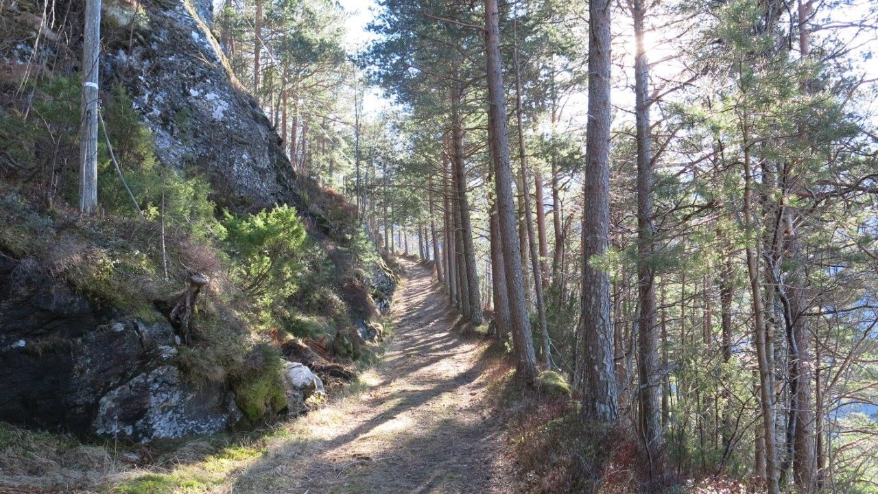 Fint å gå tur oppi Gammelvegen.