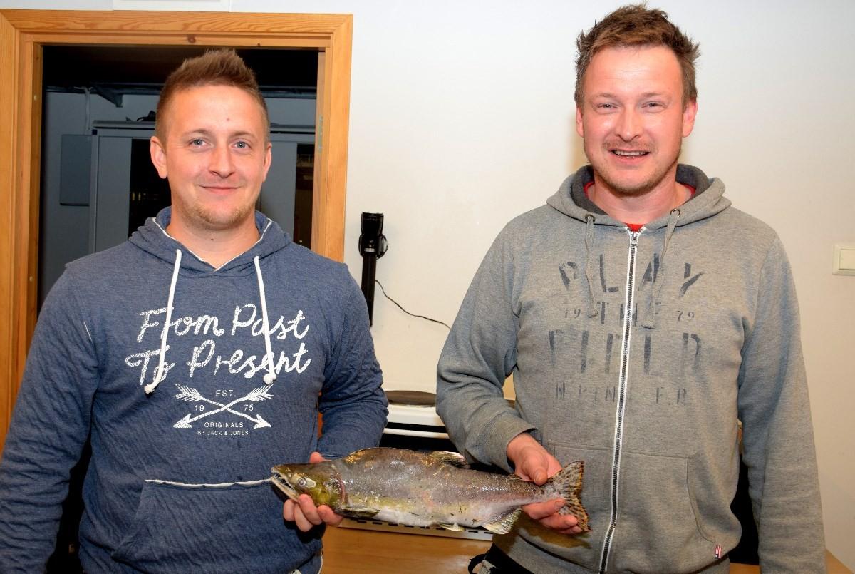 Slik ser pukkellaksen ut - stamfiskansvarleg Bjørnar Aasbø og lærling Kjetil Haugen viser fram pukkellaksen som vart teken på garn under stamfisket i Toåa.  Foto: Jon Olav Ørsal