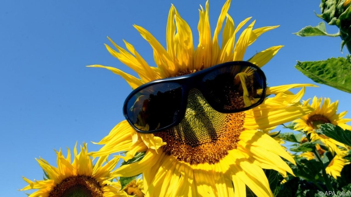 I sommarmånadene juni, juli og august har det i år vore 24 sommardagar.  (Illustrasjon frå internett.)