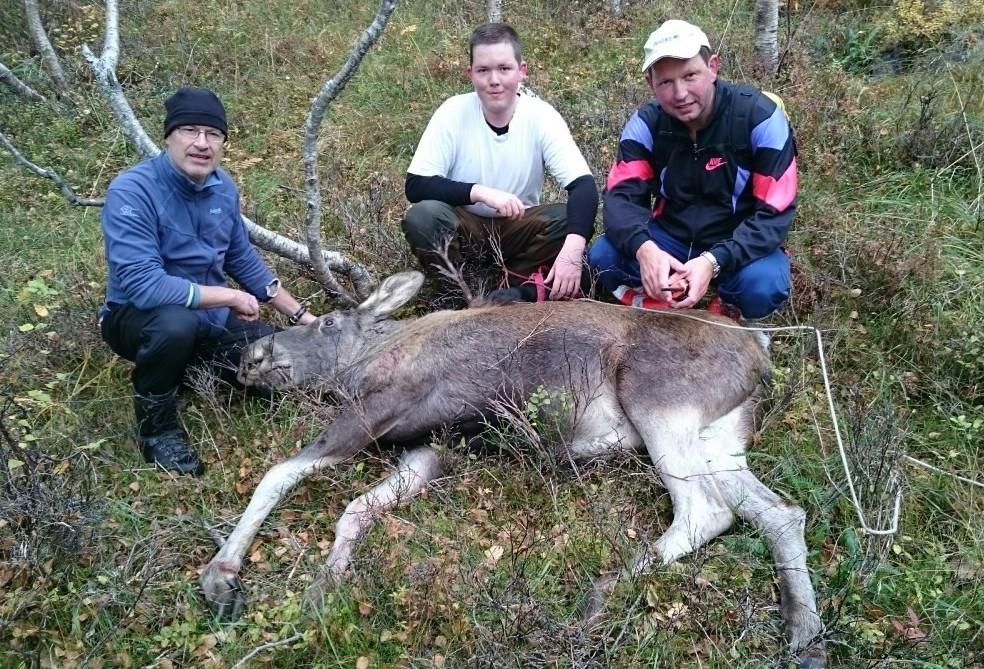 Det var ei elgku - fjorskalv - på jaktlaget i dag. Frå venstre Trond Svinvik, Nils Bergheim og Per Gjeldnes.  Foto: Anders Magne Ormset