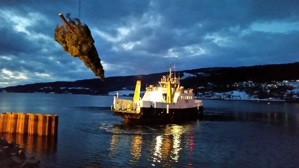 Her blir julegrana frå Nordvik heisa ombord i ferga som skal frakte det til kristiansund.  Foto L.G.Nyheim