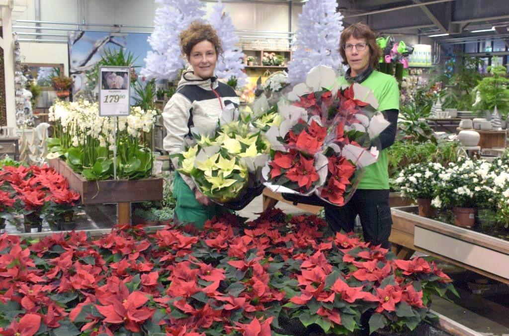 Borghild og Hubertine har fått på plass juleblomstane i butikken.  Foto: Jon Olav Ørsal