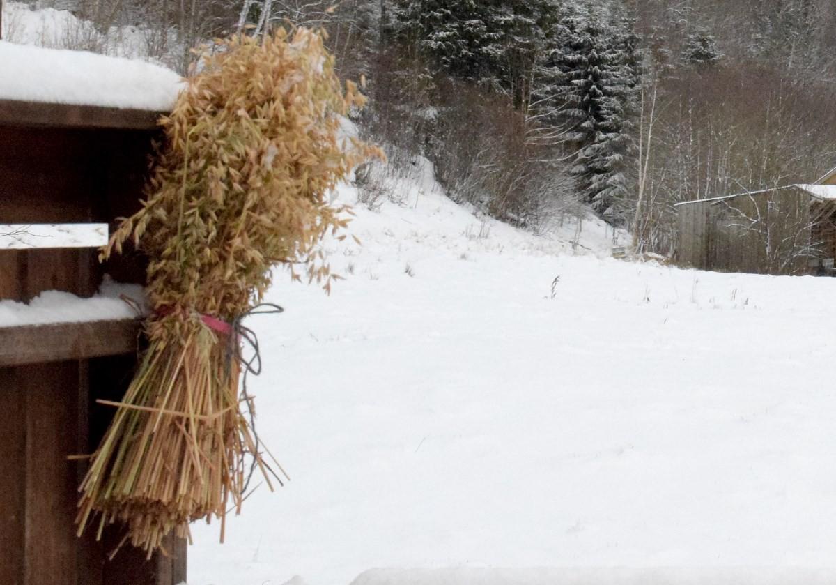 Laber interesse for juleneket hittil, men no blir det kaldare fram til tysdag...   Foto: Jon Olav Ørsal