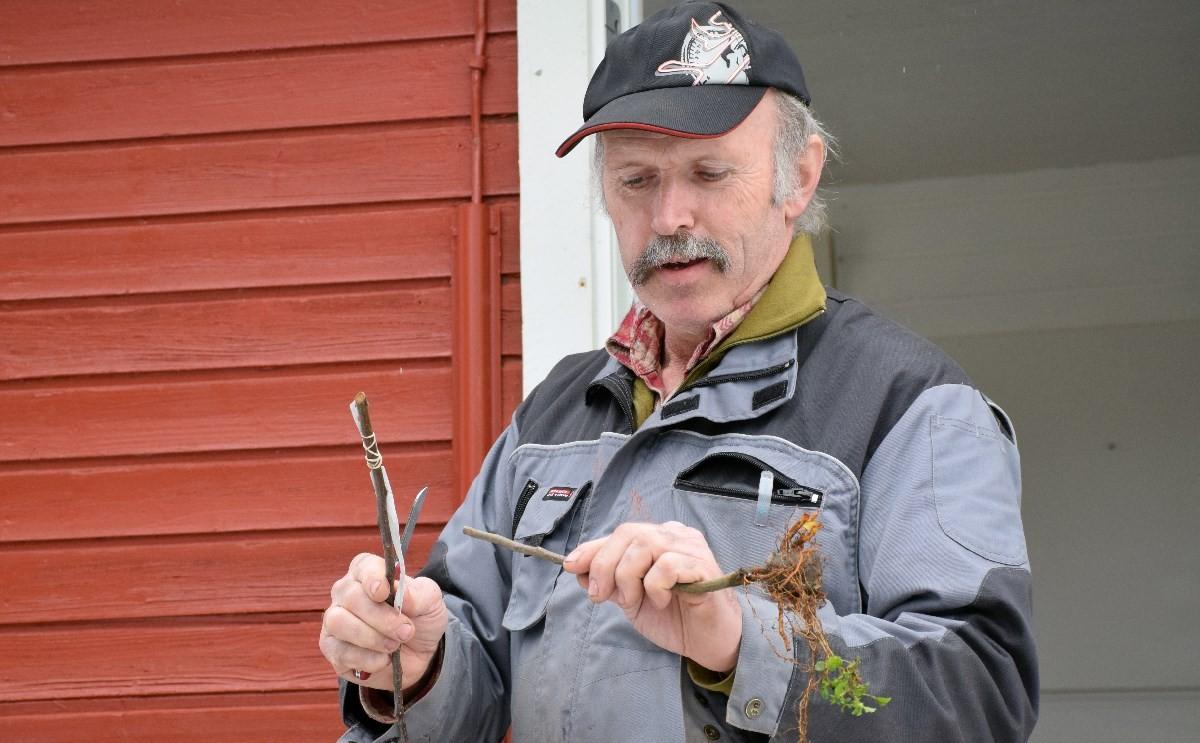 Per Arne Myraunet demonstrerte poding i arboretet laurdag.  foto: Jon Olav Ørsal