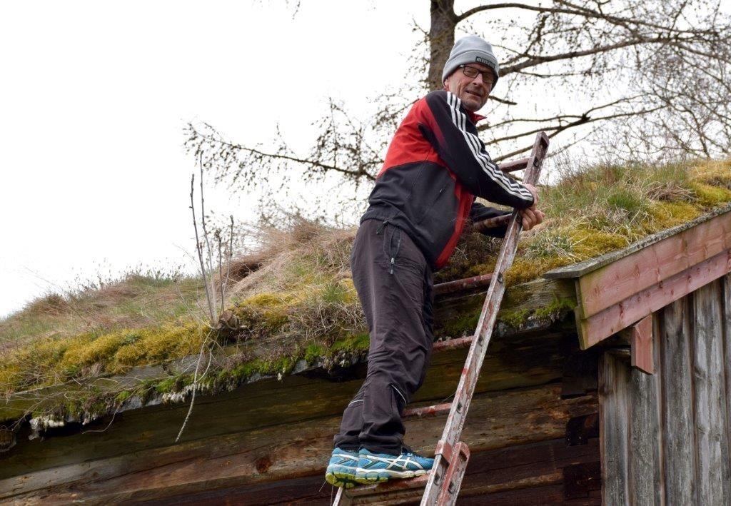 Gudmund på tur opp på stabburstaket for å sjekke reiret.  Foto: Jon Olav Ørsal