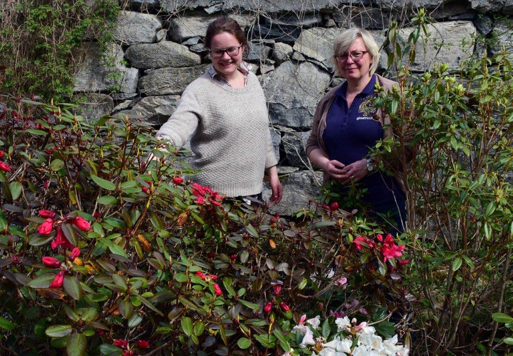 No kjem rododendron-blomstringa for fullt, seier maja Frønes og Katarina Wedelsbäck-Bladh.  foto: Jon Olav Ørsal