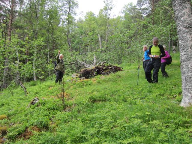Ved Litljsetra-Vårsetra - Utistua Ulvund