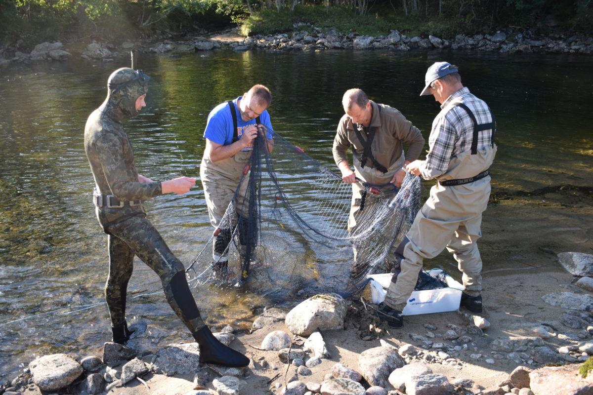 Dei sikrar gode todalsgener gjennom stamfiske.  Frå venstre Ole Martin Øyen, Ola Einar Øyen, Ola Bruset og harald Myrås.   Foto: Jon Olav Ørsal