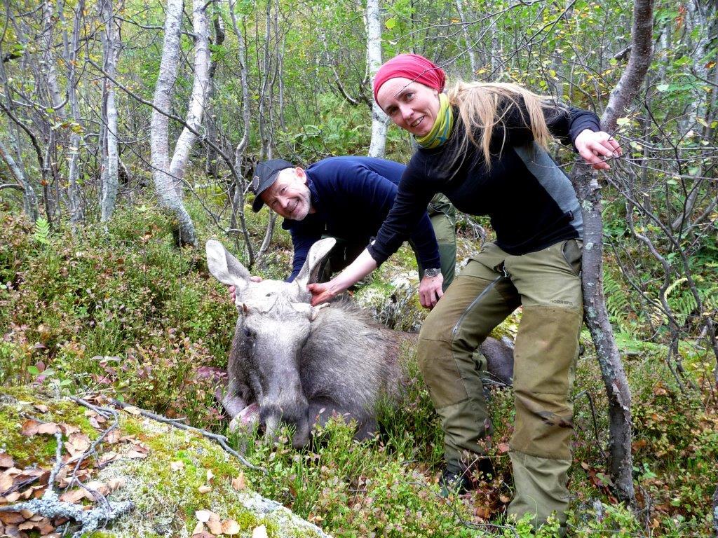 Brit Grønmyr med ungoksen  ho felte oppi Tjerrhjellia. Foto: Kristen Halle