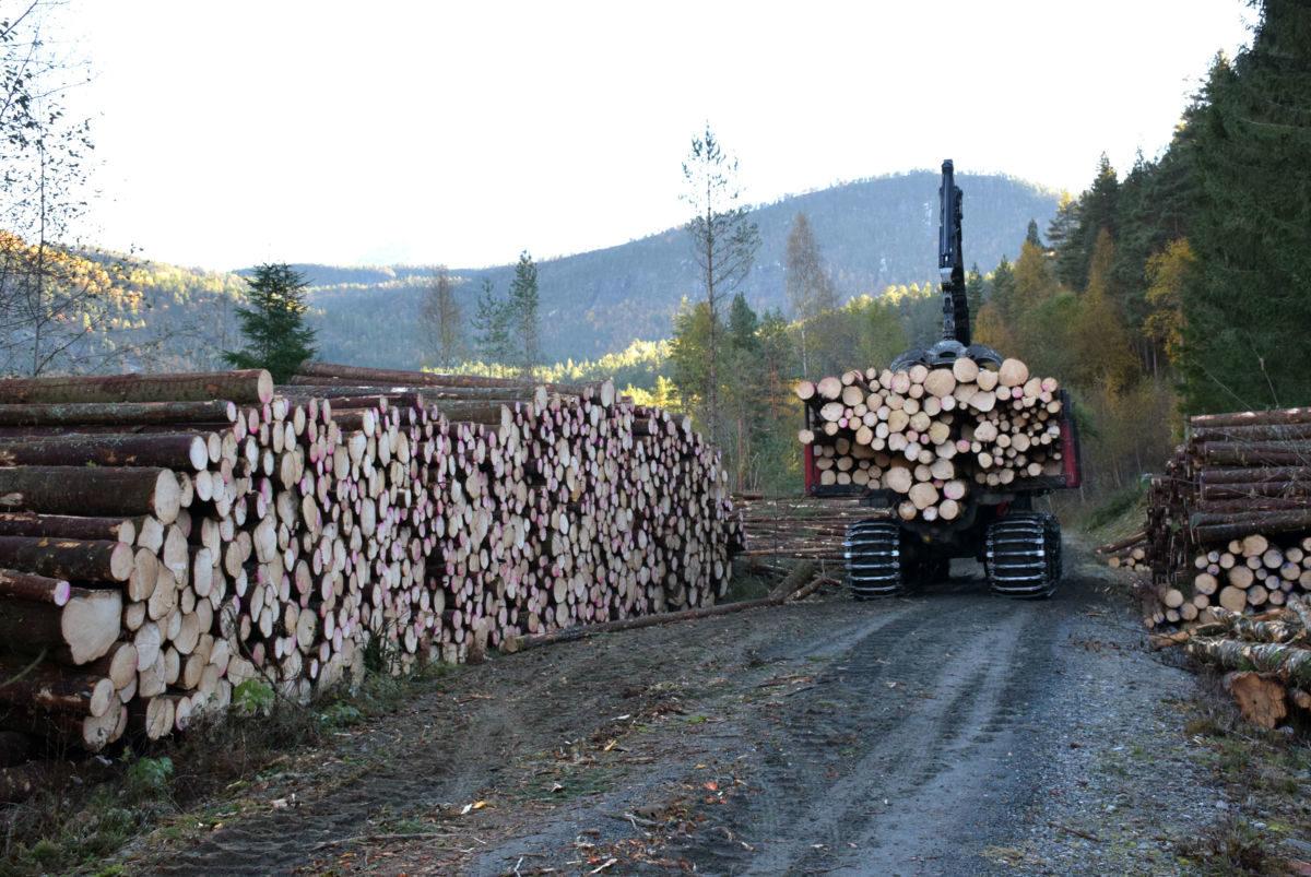 skogsdrift2_5685