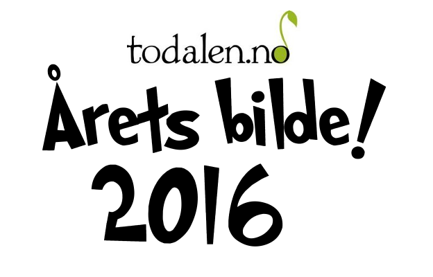 Stem på Årets bilete 2016