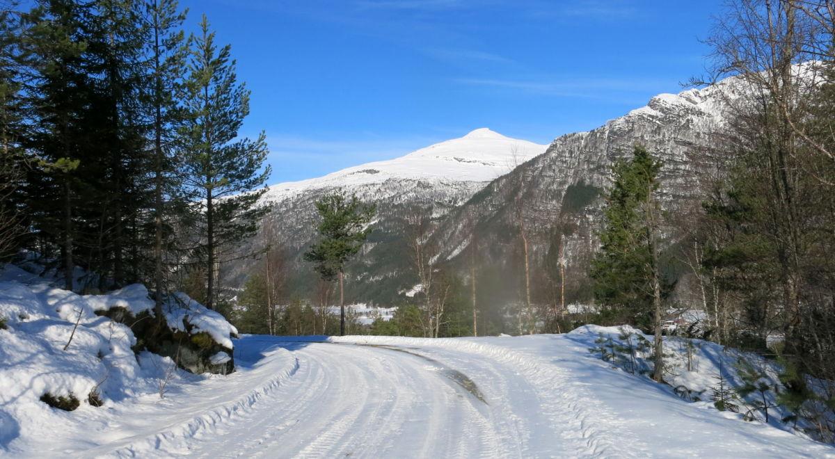 Fint å gå tur etter skogsvegen i Øyalia. Foto: Dordi J H