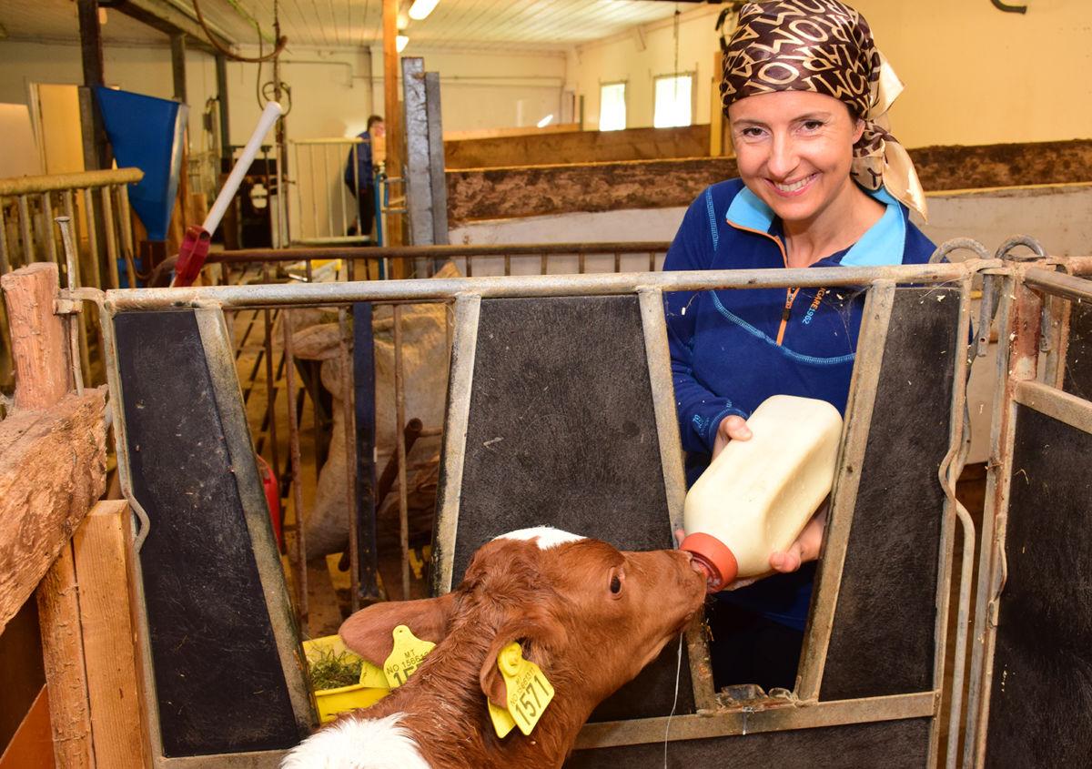 Godt med ein mjølkeskvett - råmjølk frå flaska gjorde nok godt for kalven som var eit par dagar gamal.  Foto: Driva/Jon Olav Ørsal