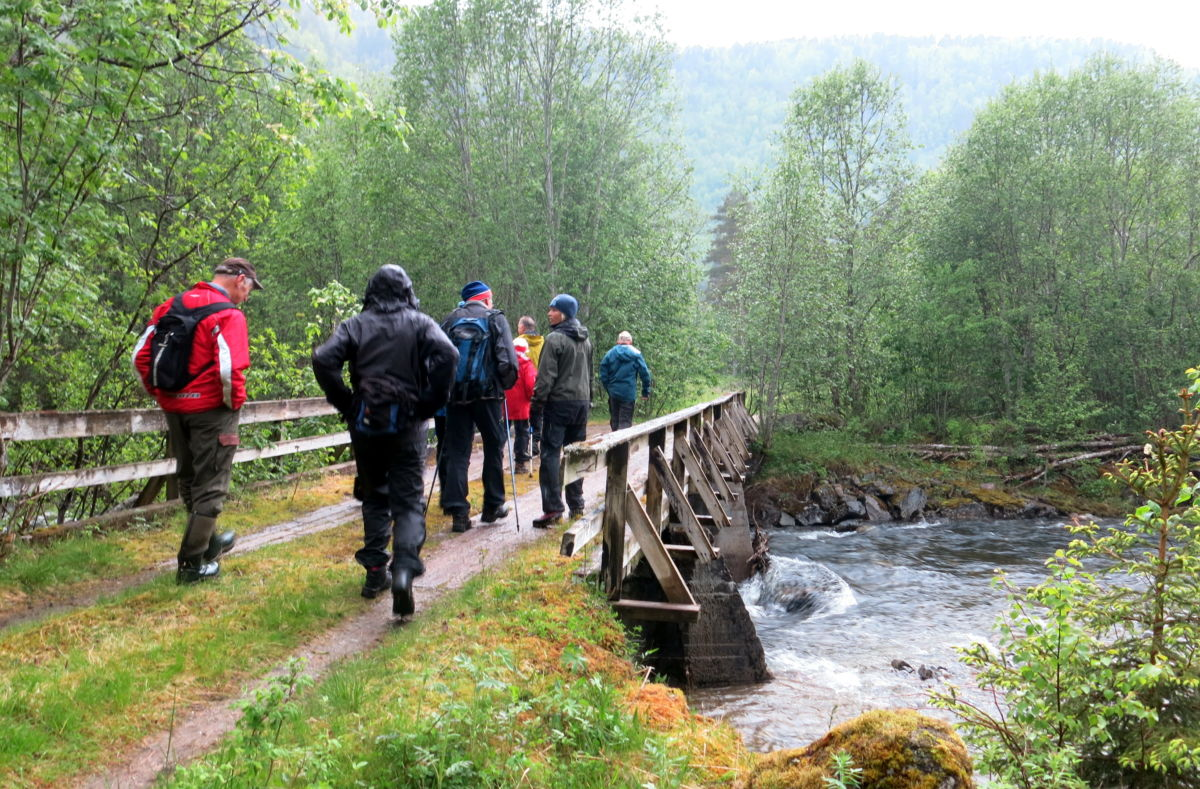 På tur over Romåbrua i juni 2015, trimgruppe frå Todalen il. Foto: Dordi J H