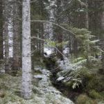 November  i  Øyamarka