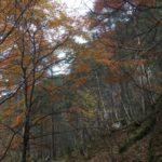 Gammelveien  i  Svinvika