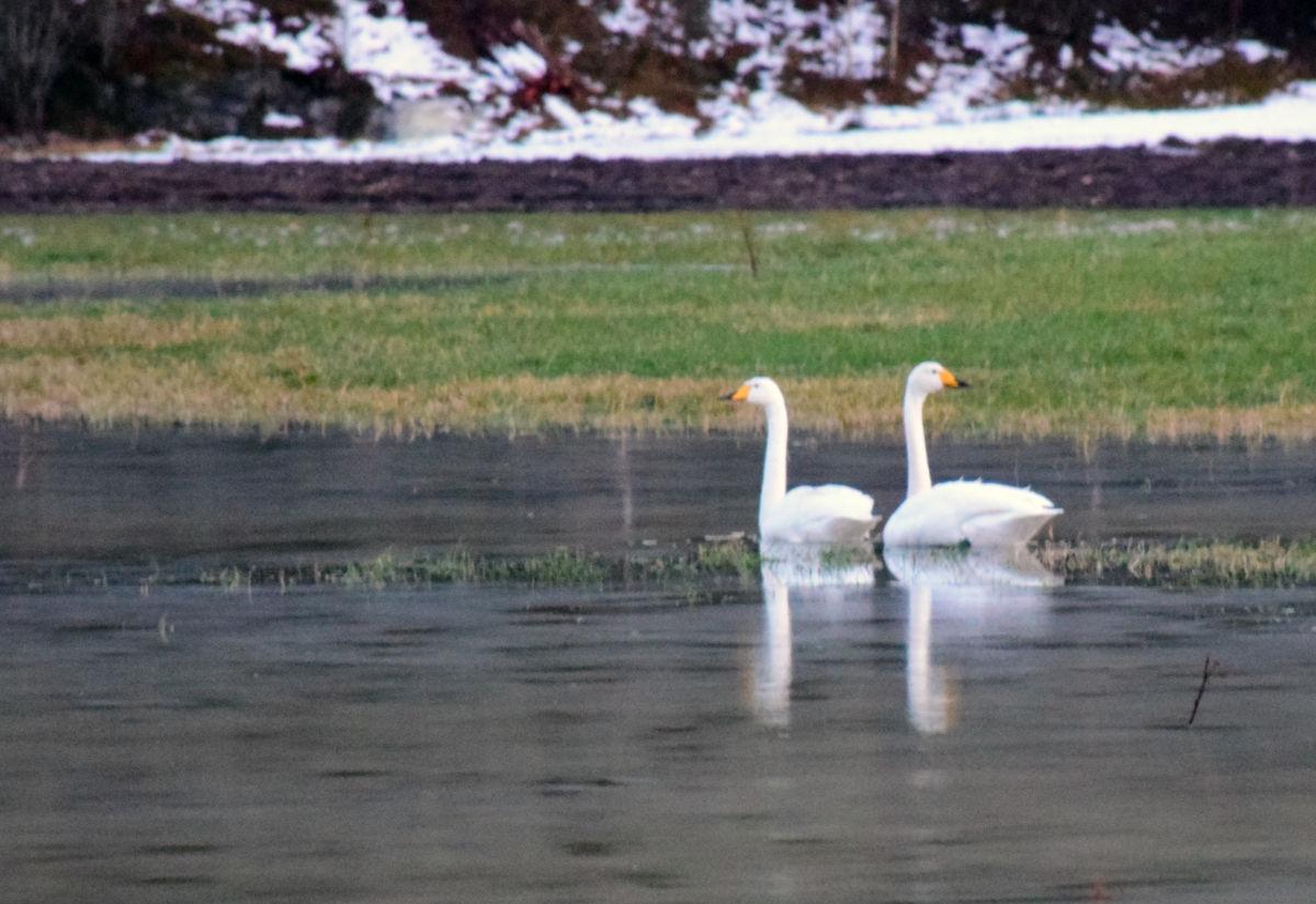 Litt uvanleg vintervêr og vinterbesøk - foto: Jon Olav Ørsal