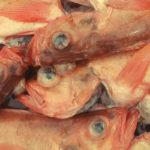 Spis  mer  fisk