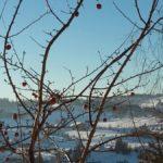 Vintereple
