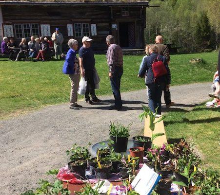 Fleire aktiviteter på Åsen laurdag